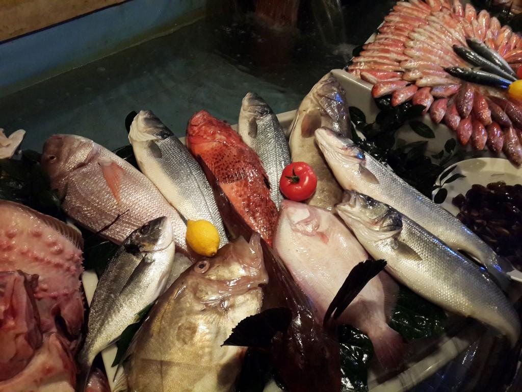 Çeşit Çeşit Günlük Balıklar...